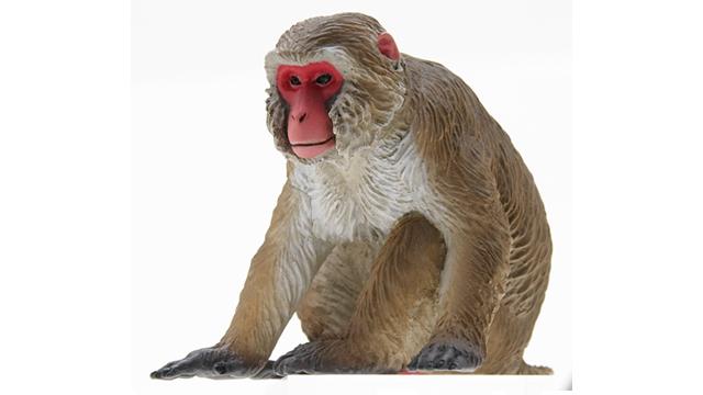ニホンザルの画像 p1_9